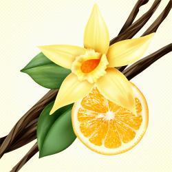 vainilla citrus